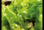 Φύκη από τη Μεσόγειο
