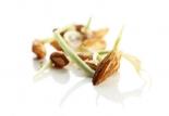 L'huile de germe de blé des produits Le Petit Marseillais